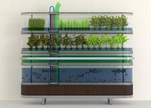 Homefarming: Philips Biosphere Home Farm